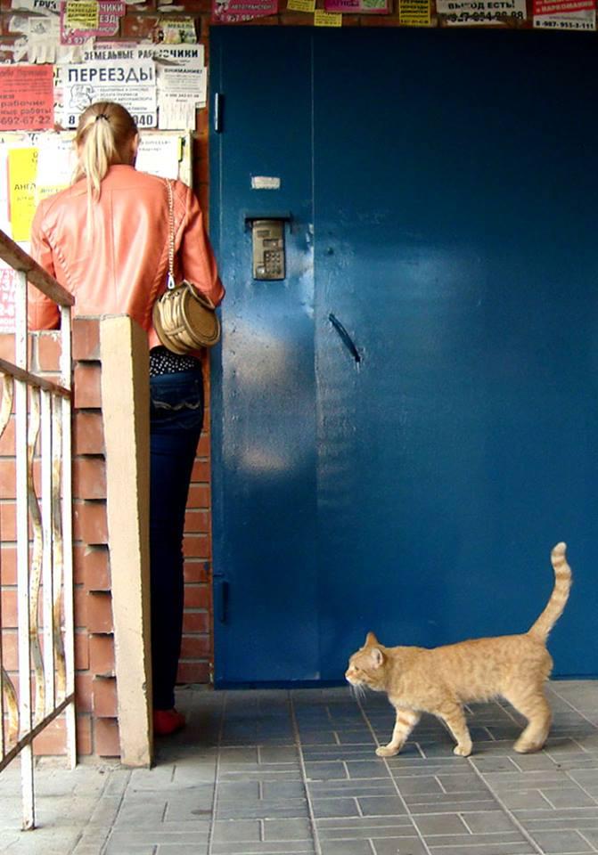 Рыжий кот и кандидат Ольга Вайцберг