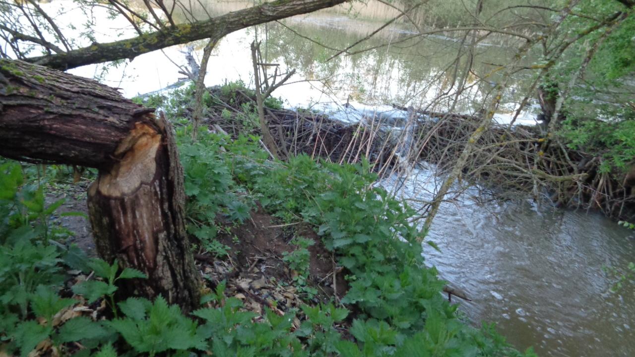 Запруда на реке рядом с деревней Лисинцево